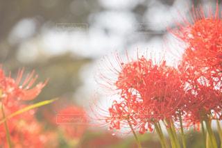 近くの花のアップの写真・画像素材[1551875]