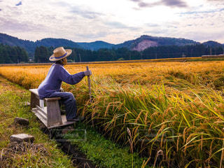 稲を見守るかかしの写真・画像素材[1134503]