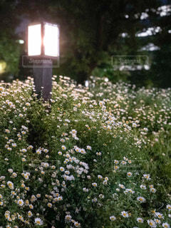 野の花の写真・画像素材[1150298]
