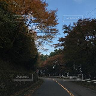紅葉の道路のビューの写真・画像素材[1134029]