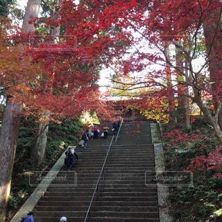 延暦寺の階段の写真・画像素材[1134031]