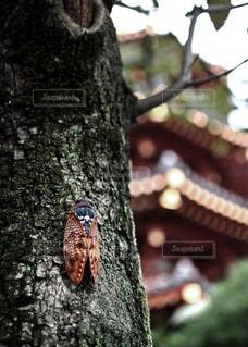 鳥が木に止まってください。の写真・画像素材[1320476]