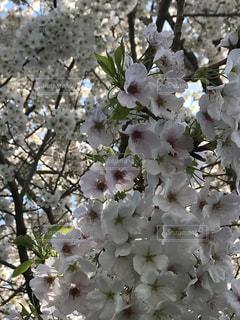 近くの花のアップの写真・画像素材[1134097]
