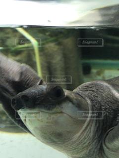 近くに動物のアップの写真・画像素材[1134102]