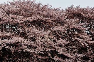 近くの木のアップの写真・画像素材[1134115]