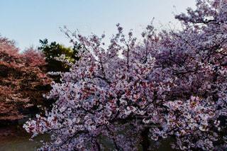 近くの木のアップの写真・画像素材[1134117]