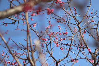 木の枝にとまる小鳥の写真・画像素材[1134140]
