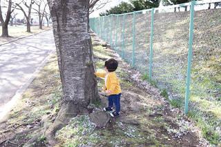 大きな木の写真・画像素材[1139542]