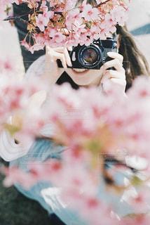 桜咲くの写真・画像素材[1713152]