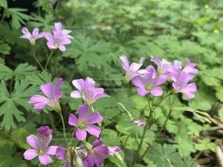 近くの花のアップの写真・画像素材[1137877]