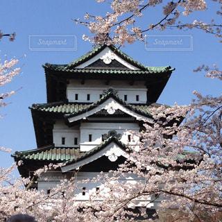 弘前城と桜の写真・画像素材[1134766]