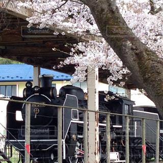 SLと桜の写真・画像素材[1134768]