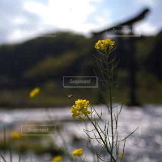 近くに黄色い花のアップの写真・画像素材[1134998]