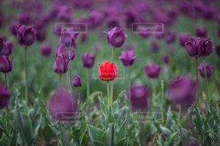 ピンクの花は草の中に立っています。の写真・画像素材[1136582]