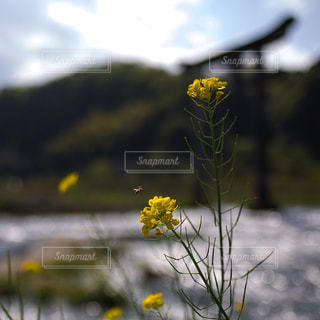 近くに黄色い花のアップの写真・画像素材[1138706]