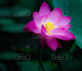 近くの花のアップの写真・画像素材[1311027]