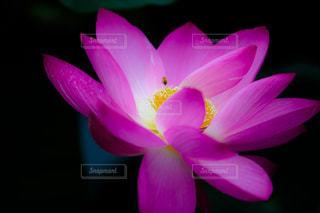 近くの花のアップの写真・画像素材[1311028]