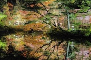森の中の滝の写真・画像素材[3872826]
