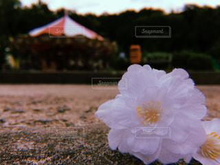 落ちてたお花とメリーゴーランドの写真・画像素材[1285031]