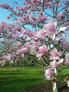花の写真・画像素材[44679]