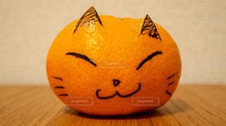 らくがきみかん猫の写真・画像素材[1135578]