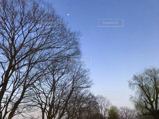 森の大きな木の写真・画像素材[1135681]