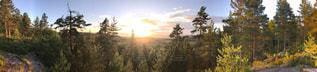 背景の夕日とツリー - No.1135707