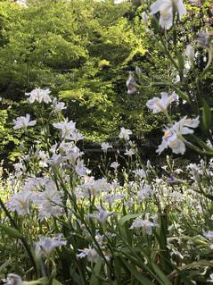 新宿御苑の軽やかな花たち - No.1135713