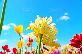 近くの花のアップ - No.1135717