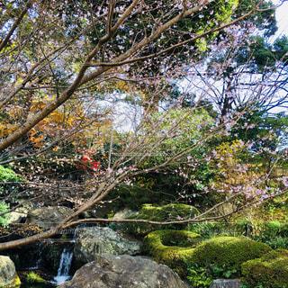 フォレスト内のツリー - No.1136528