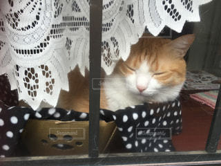 昼下がりの猫のお昼寝 - No.1137954