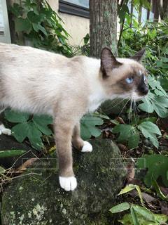 探検する子猫 - No.1137959