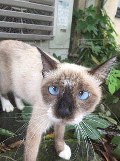 緑の植物の上を歩く青い目の野良猫 - No.1137961