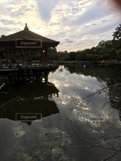 奈良公園の水面の写真・画像素材[1137963]