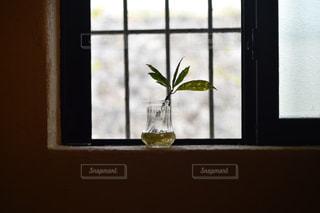 花の花瓶が窓の前で座っています。の写真・画像素材[1136902]