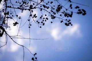 skyblueの写真・画像素材[1146048]