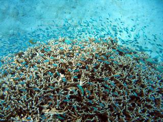 サンゴ、青い魚の写真・画像素材[1137831]