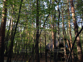 雑木林の木の写真・画像素材[1140788]