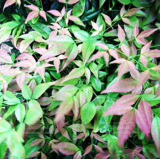 茂みや木のグループの写真・画像素材[1144450]