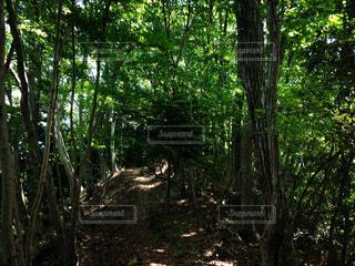 フォレスト内のツリーの写真・画像素材[1168536]