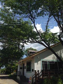 家の前に木の写真・画像素材[1192458]
