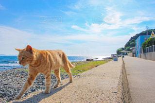 猫の写真・画像素材[629970]