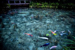 水のカラフルな水泳のグループの写真・画像素材[1136396]