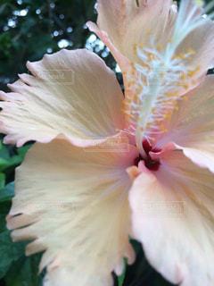 夏の花の写真・画像素材[1136457]