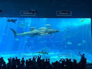 美ら海水族館の写真・画像素材[1421325]