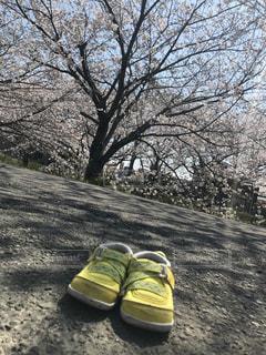 黄色の靴の写真・画像素材[1138882]