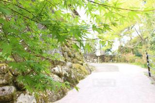 初夏の小道の写真・画像素材[1136731]