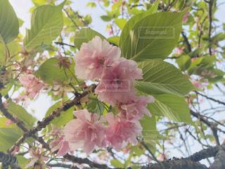 近くの木のアップの写真・画像素材[1137610]
