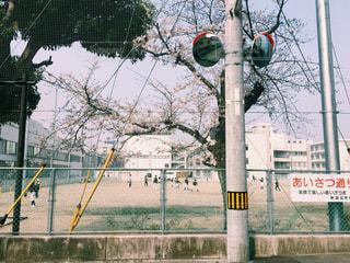 春の日の通学路の写真・画像素材[1136954]