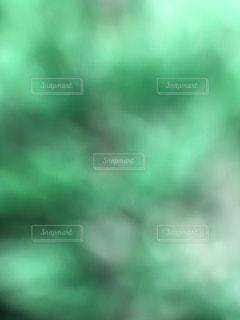 緑の風の写真・画像素材[1164407]
